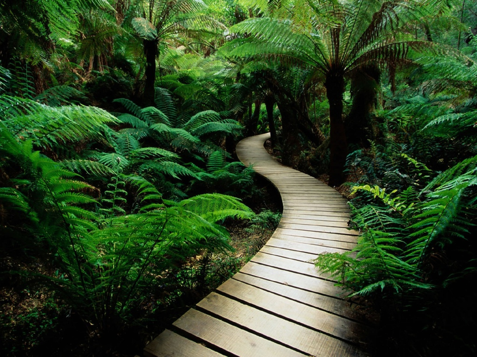 Greenery-Path-wallpaper-wp5405422