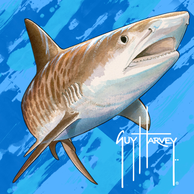 Guy-Harvey-Art-Tiger-Shark-by-Guy-Harvey-available-as-cell-phone-from-wallpaper-wp5405476