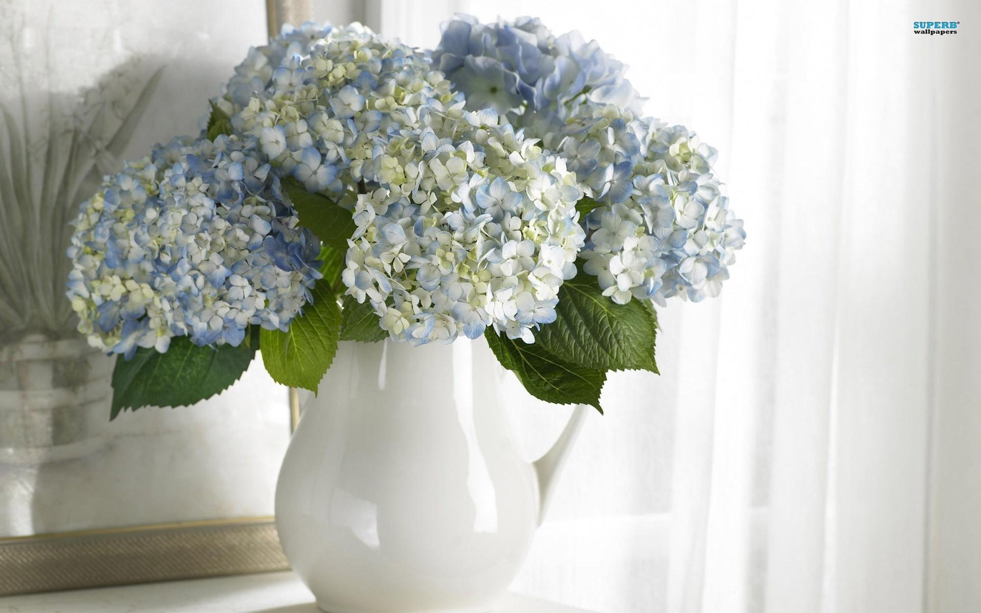 HD-A-Vase-Of-Lovely-Hydrangeas-wallpaper-wp5008404