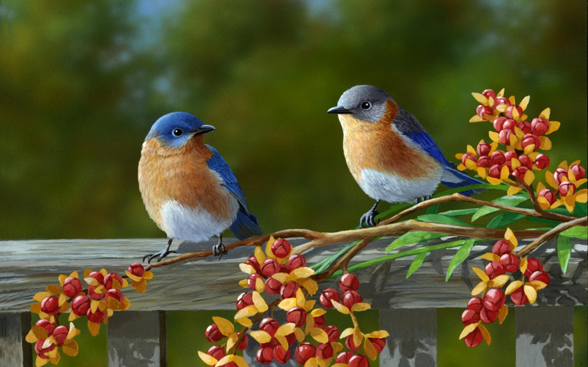HD-Beautiful-Pair-Of-Colorful-Birds-wallpaper-wp5008408