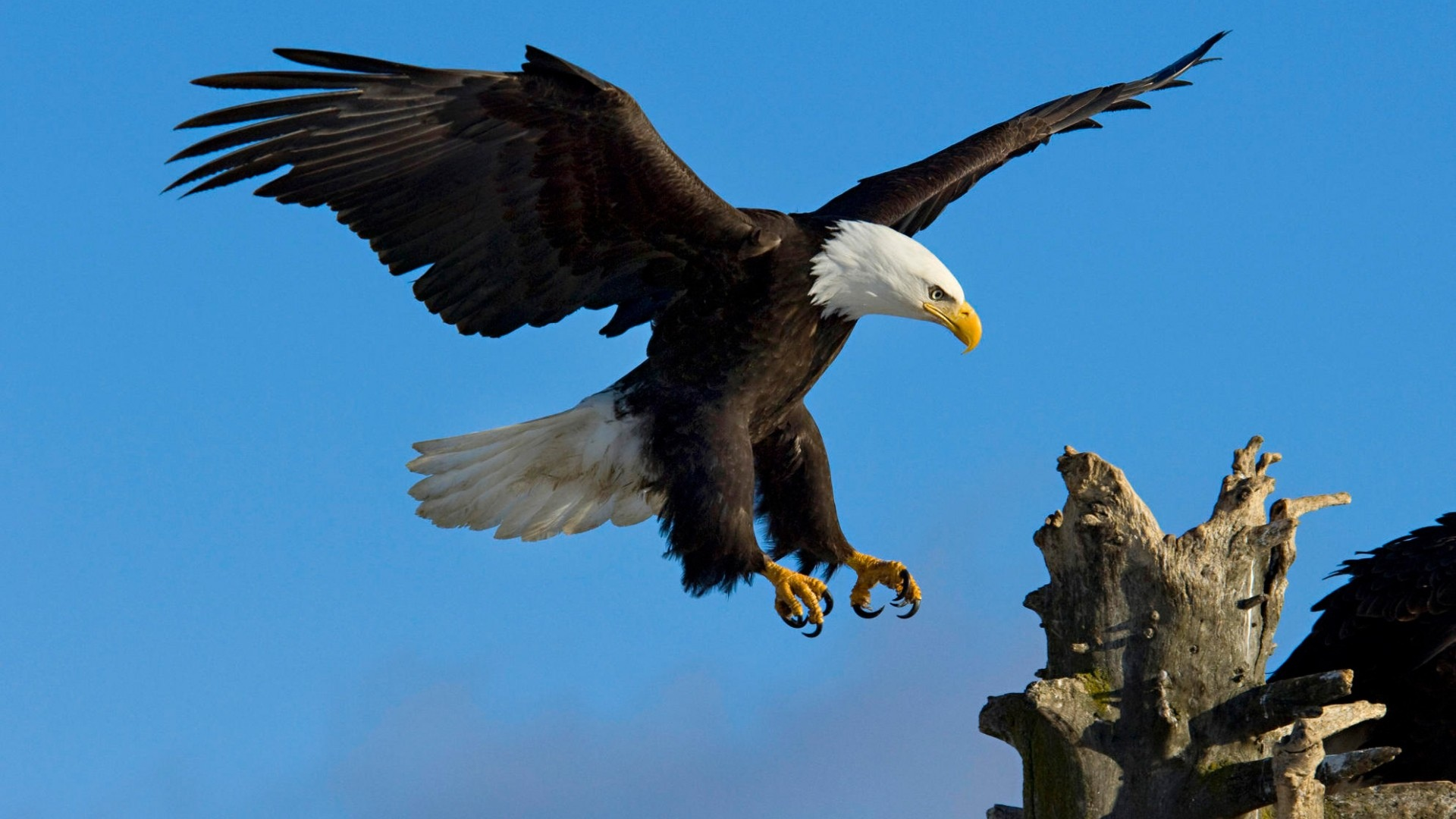 HD-eagle-pictures-ile-ilgili-g%C3%B6rsel-sonucu-wallpaper-wp5601152