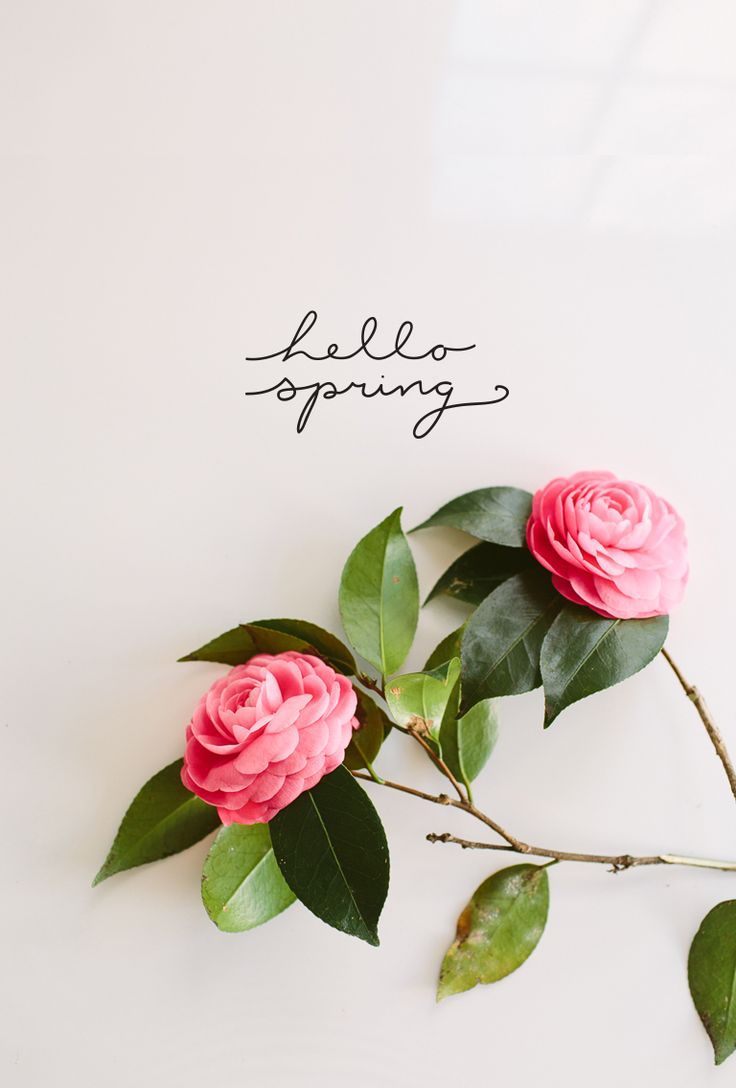 Hello-spring-wallpaper-wp426087-1