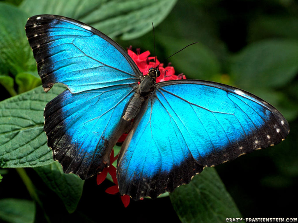 High-Definition-Photography-Collection-of-Butterflies-wallpaper-wp4407896