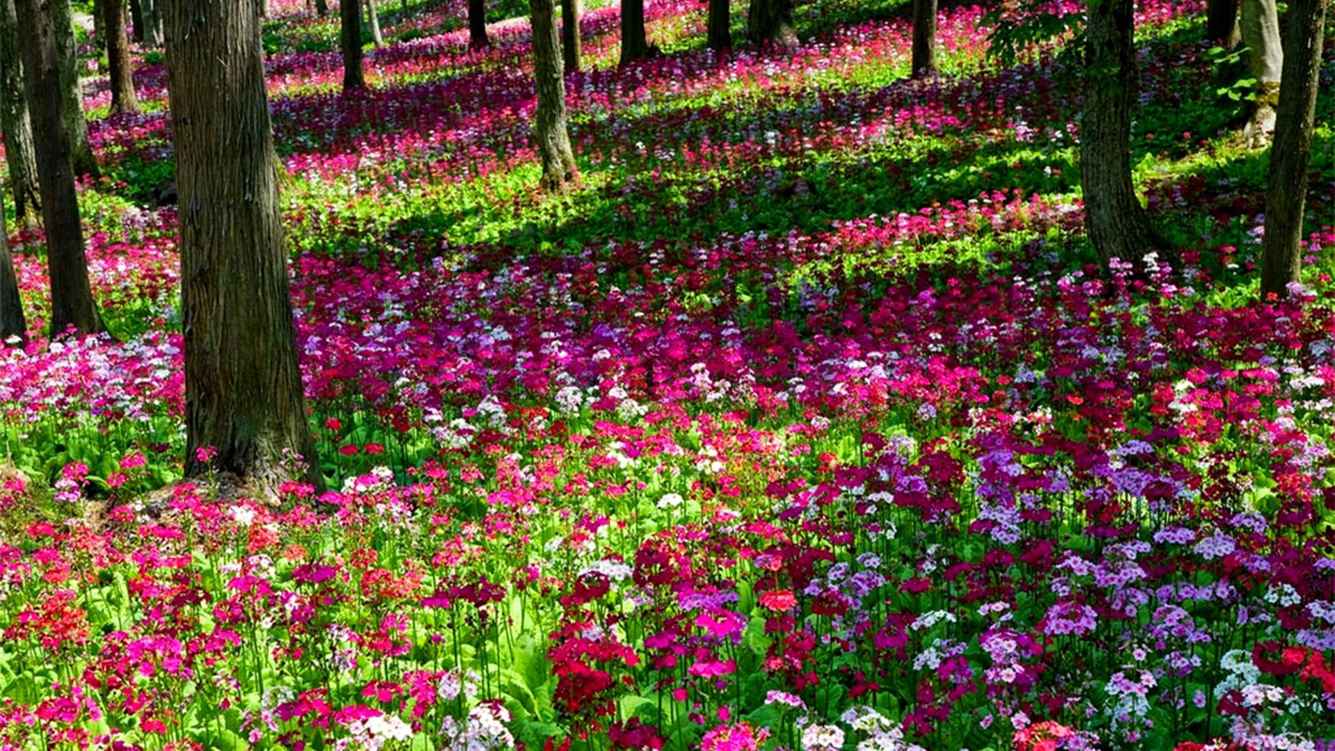 Image-detail-for-Beautiful-Multi-Colored-Flower-Garden-All-Flowers-Send-wallpaper-wp4408315