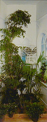 Indoor-Garden-wallpaper-wp4807654