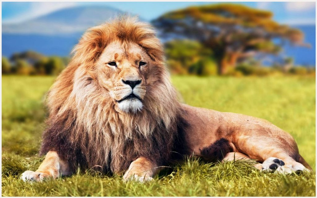 King-Lion-In-The-Jungle-king-lion-in-the-jungle-1080p-king-lion-in-the-jungle-wallpaper-wp3407822