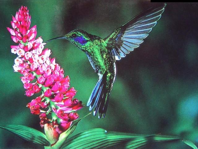 Kolibri-wallpaper-wp4607604-1