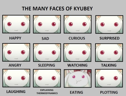 Kyubey-Wait-but-The-expressions-of-emotion-dont-make-sense-Kyubey-would-be-highly-confused-wallpaper-wp5009662