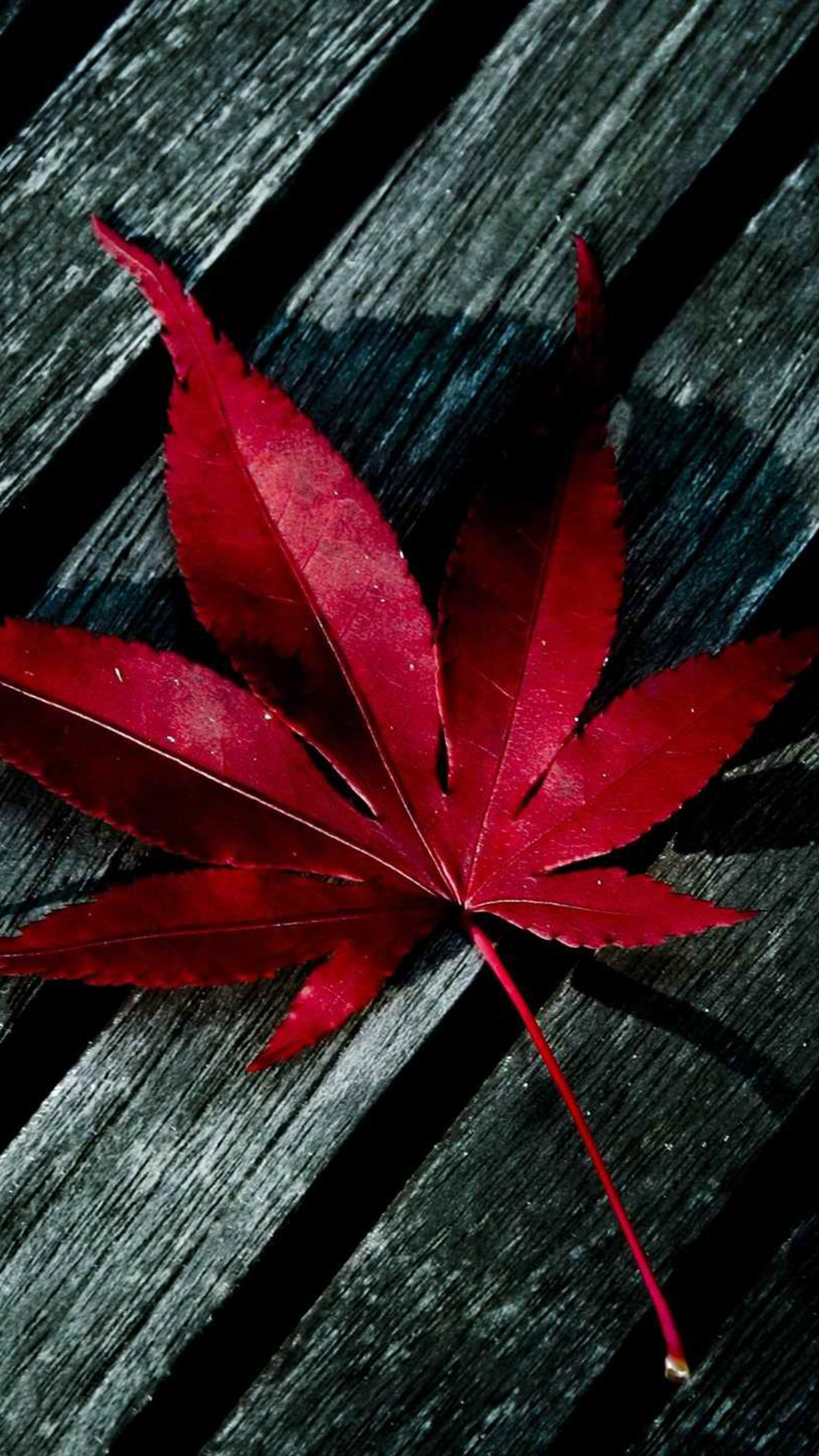 Leaves-Maple-iPhone-wallpaper-wp422988