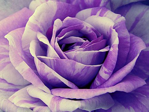 Life-in-Purple-wallpaper-wp6004630