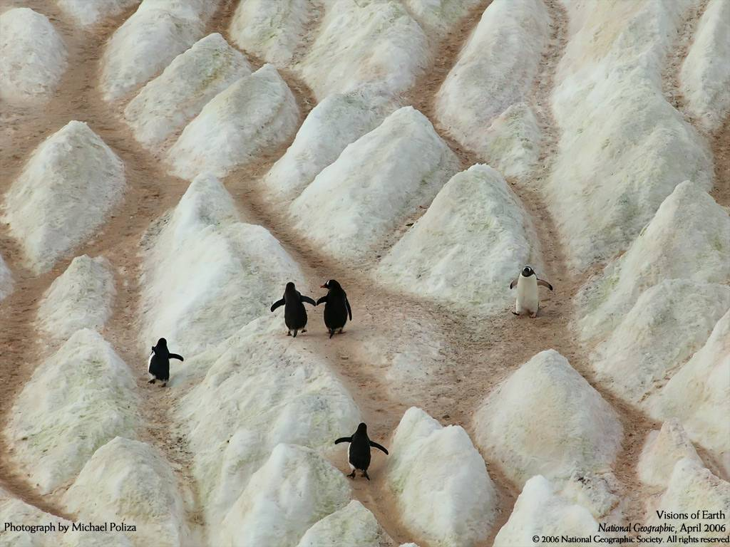 Mind-Blowing-Photos-from-National-Geographic-wallpaper-wp5606768