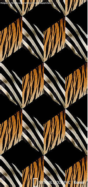 OpArt-door-mural-wallpaper-wp4809233