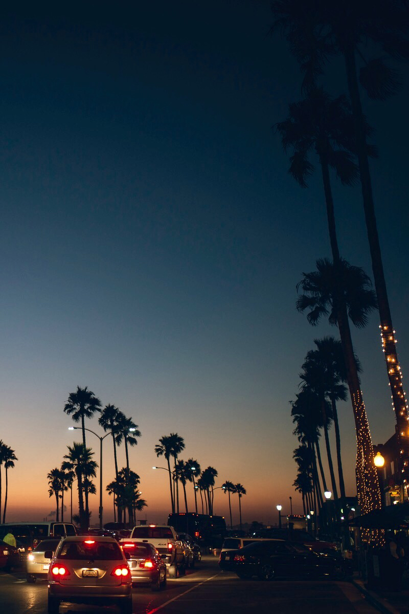 Palm-trees-Sunset-iPhone-wallpaper-wp52010111