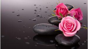 rosas wallpaper