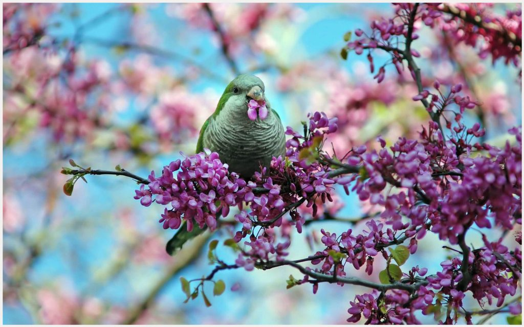 Spring-Flowers-And-Cute-Bird-spring-flowers-and-cute-bird-1080p-spring-flower-wallpaper-wp34010913