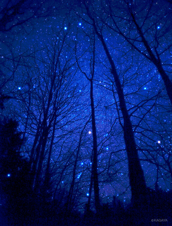 Starry-Night-the-beauty-of-a-Winter-s-Night-with-the-fire-and-ice-of-a-starry-sky-wallpaper-wp429334