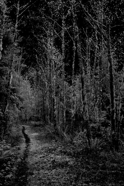 The-woods-are-lovely-dark-and-deep-But-I-have-promises-to-keep-And-miles-to-go-before-I-sleep-A-wallpaper-wp5201050