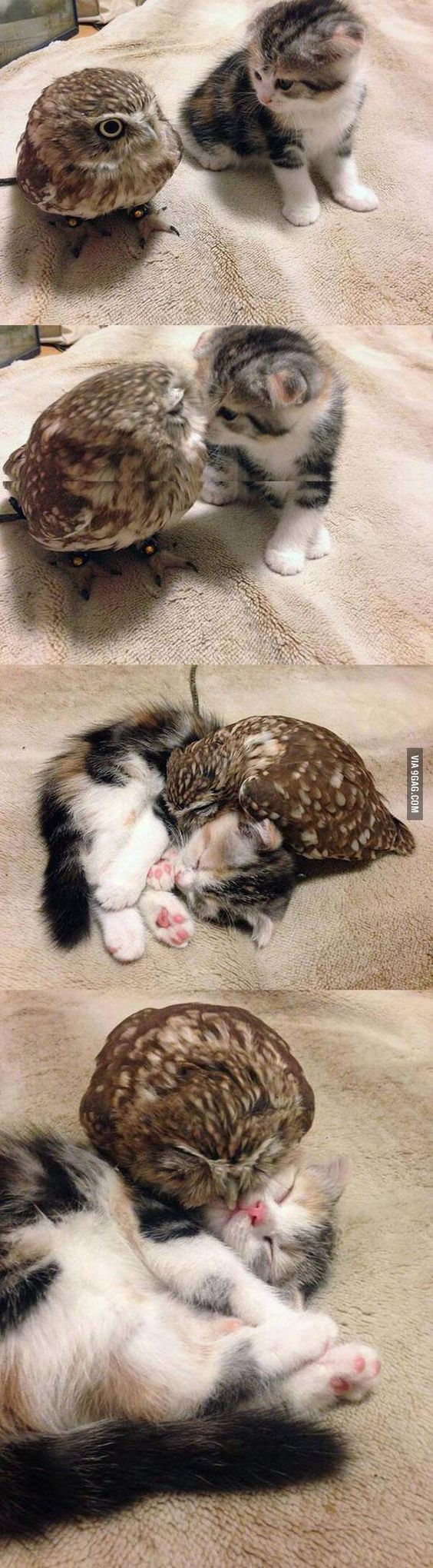 Tiny-owl-and-tiny-kitten-wallpaper-wp44012239-1