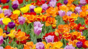 Natural Scenery Beautiful Flowers wallpaper