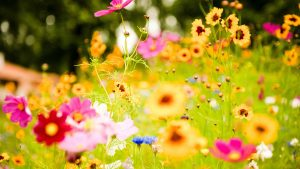 Flower Landschap wallpaper