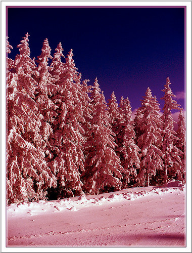 Winter-Cerca-con-Google-wallpaper-wp560684