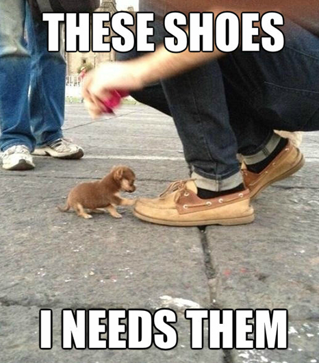 You-have-your-paws-to-walk-on-so-keep-on-walking-These-shoes-are-mine-wallpaper-wp4008617