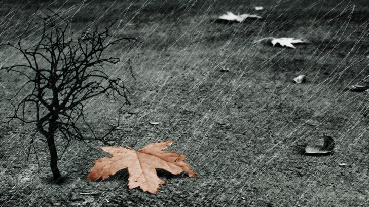 a-autumn-rain-jpg-%C3%97-wallpaper-wp6001842