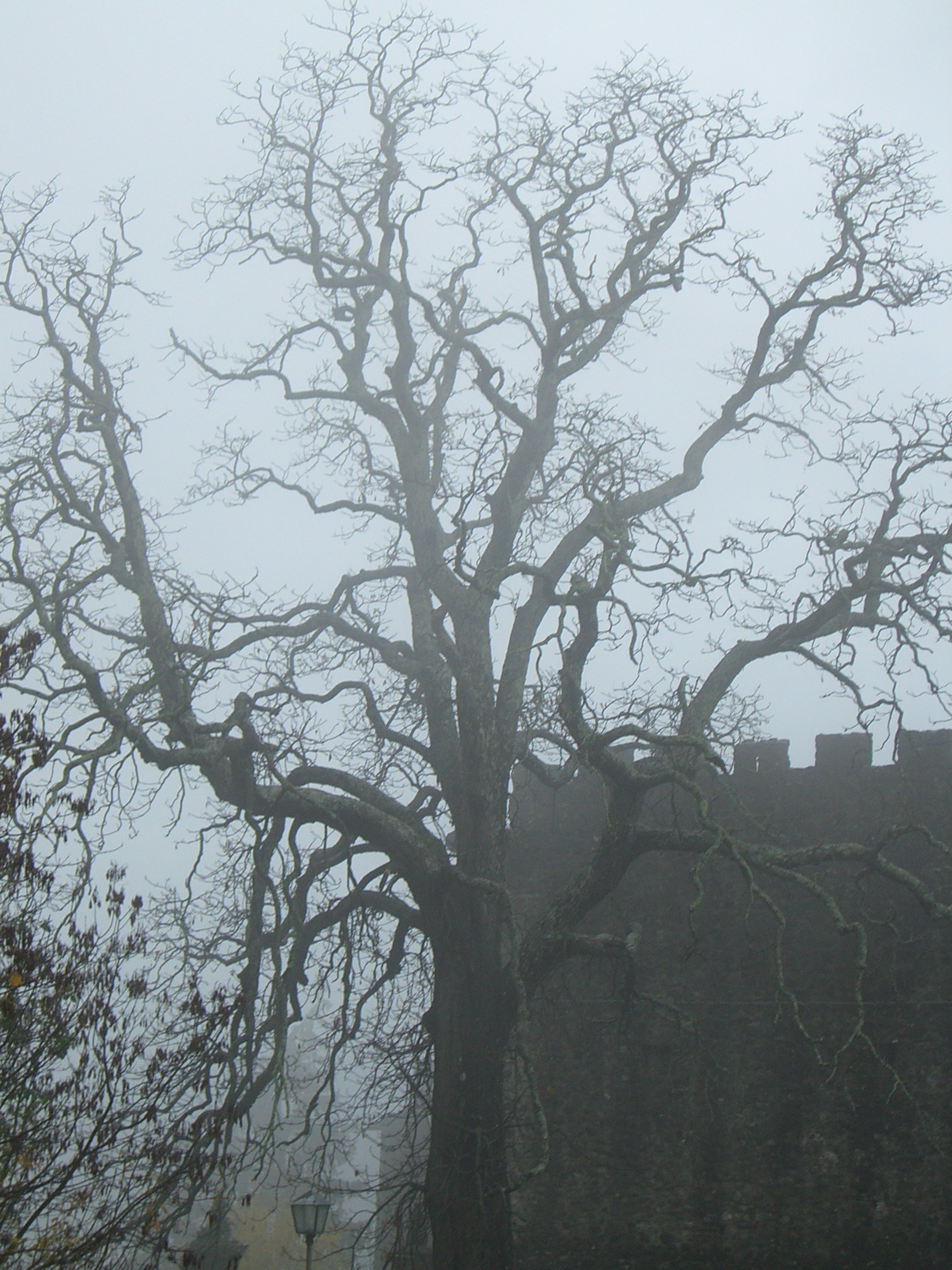 a-cool-dead-tree-in-front-of-an-old-castle-in-Northern-Tuscany-wallpaper-wp5402940