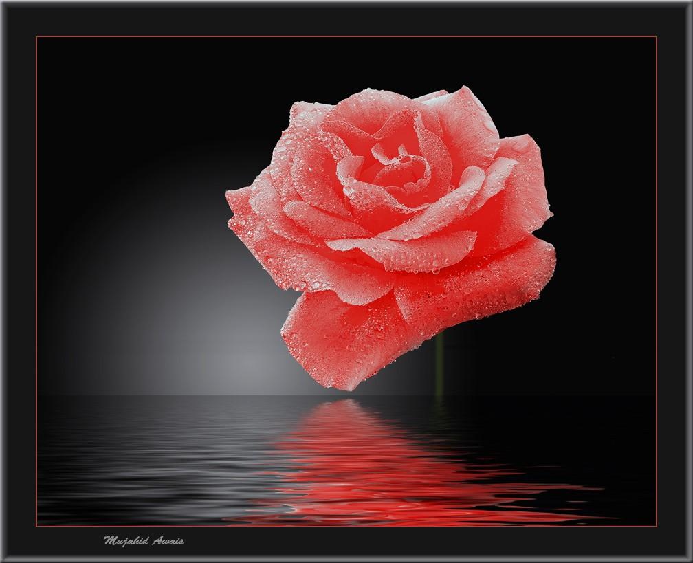 acdeeabcababa-love-flowers-desktop-wallpaper-wp3001231