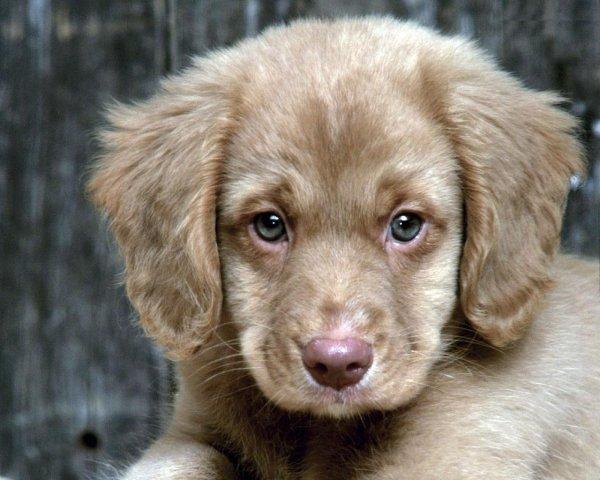 adorable-beautiful-brown-cute-dog-wallpaper-wp5602750