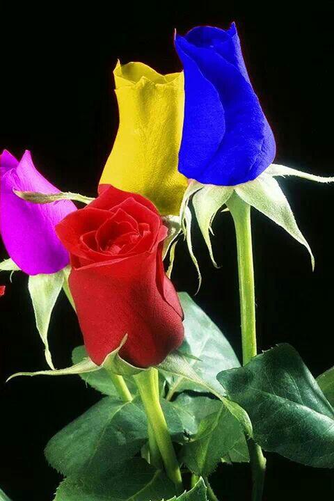 aedeabebabdfb-amazing-flowers-beautiful-roses-wallpaper-wp5602755