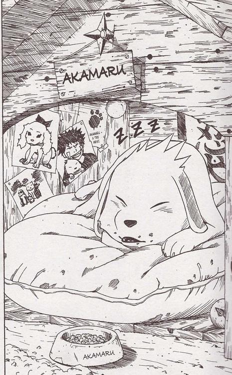 akamaru-little-nest-wallpaper-wp5203926