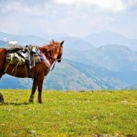 animal-grass-horse-mountain-nature-run-zeusbox-com-i-x-wallpaper-wp5204070