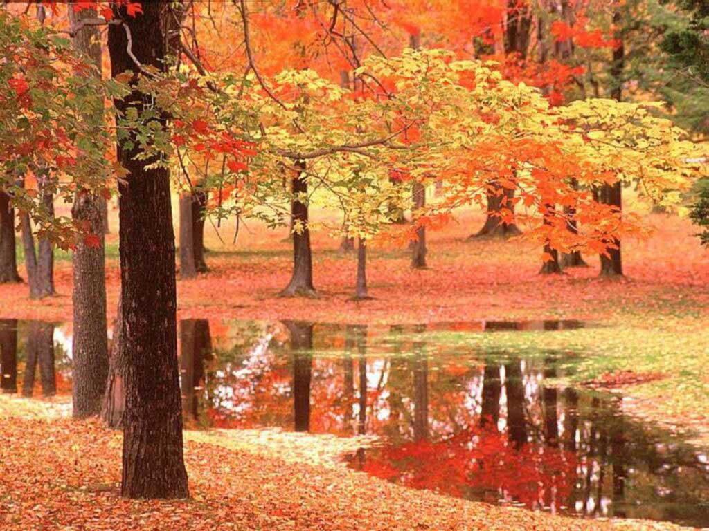 autumn-jpg-%C3%97-wallpaper-wp6002142