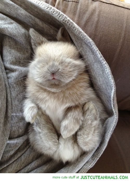 aw-he-looks-so-cozy-and-peaceful-wallpaper-wp4804402
