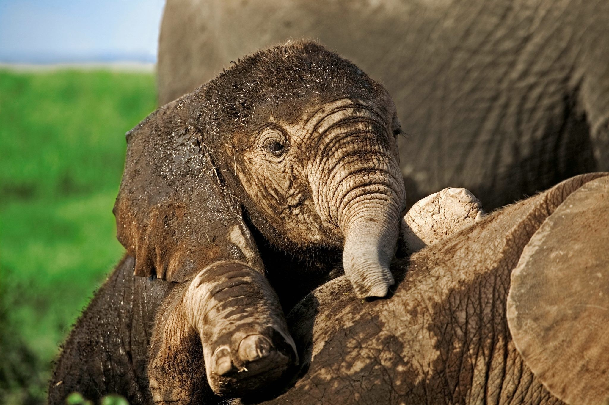 baby-elephants-learning-how-to-elephant-wallpaper-wp360714