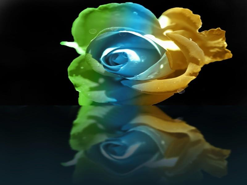 bbbbeeacab-yellow-roses-blue-yellow-wallpaper-wp3003433