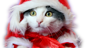 kucing christmas kertas dinding