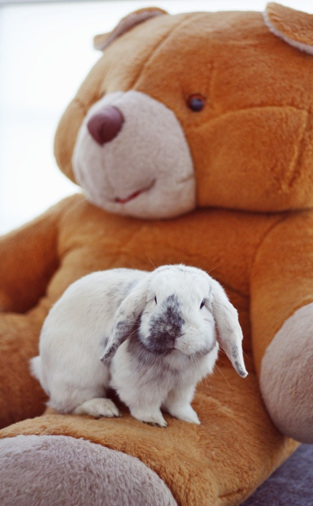 bear-and-bunny-meant-to-be-wallpaper-wp4604096-1