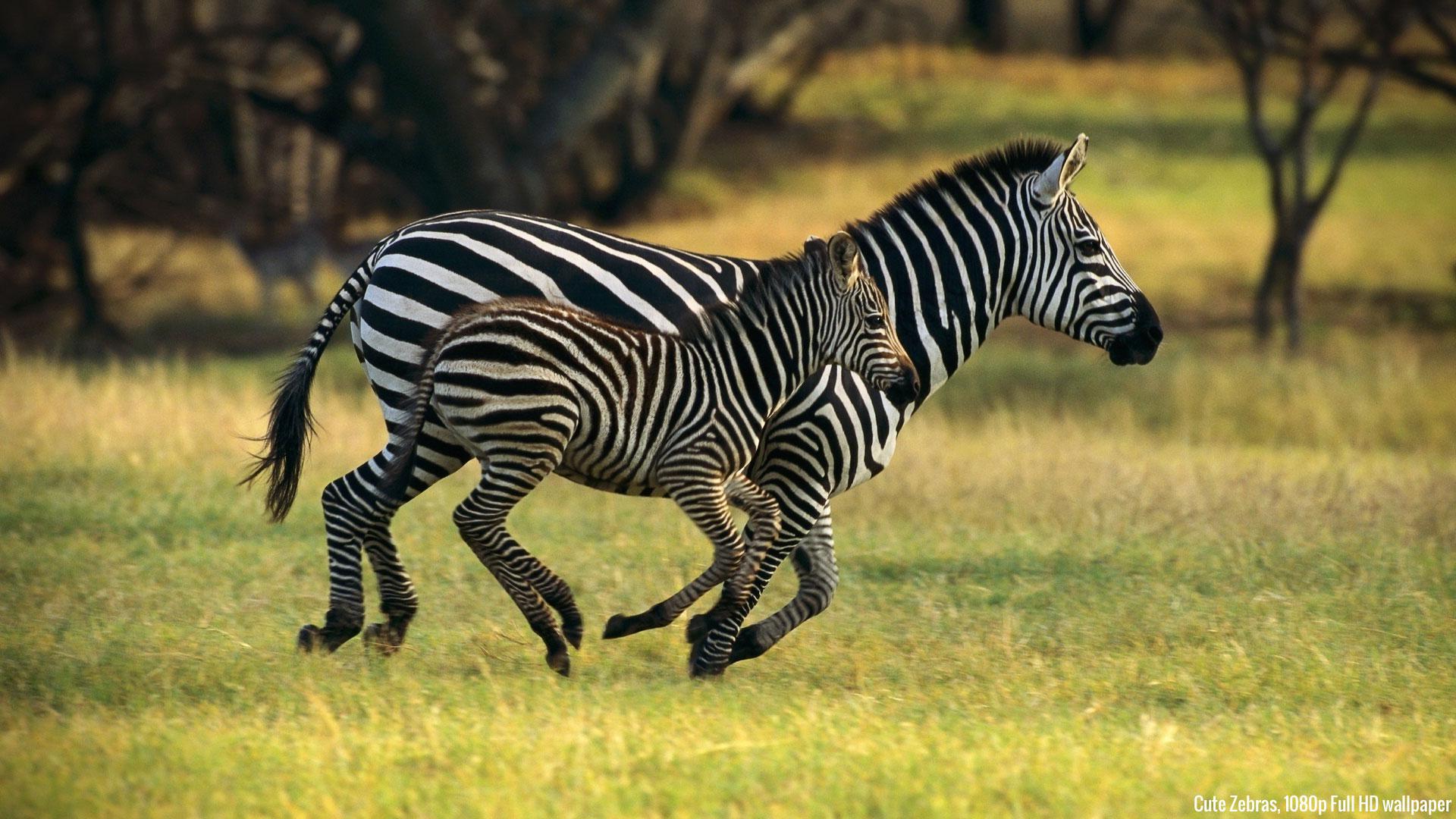 beautiful-and-cute-animals-wallpaper-wp3402978