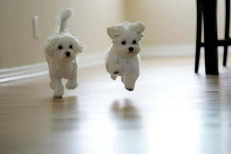 beautyful-puppy-photos-wallpaper-wp5603311