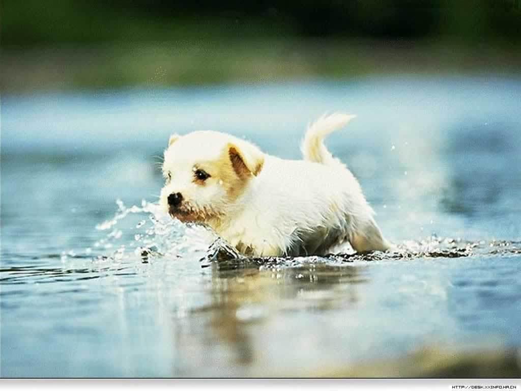 best-puppy-photos-wallpaper-wp5603371