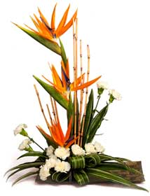 bird-of-paradise-flower-arrangement-Bing-Images-wallpaper-wp4003549