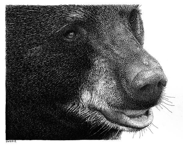 black-bear-drawing-scott-woyak-wallpaper-wp4604274-1