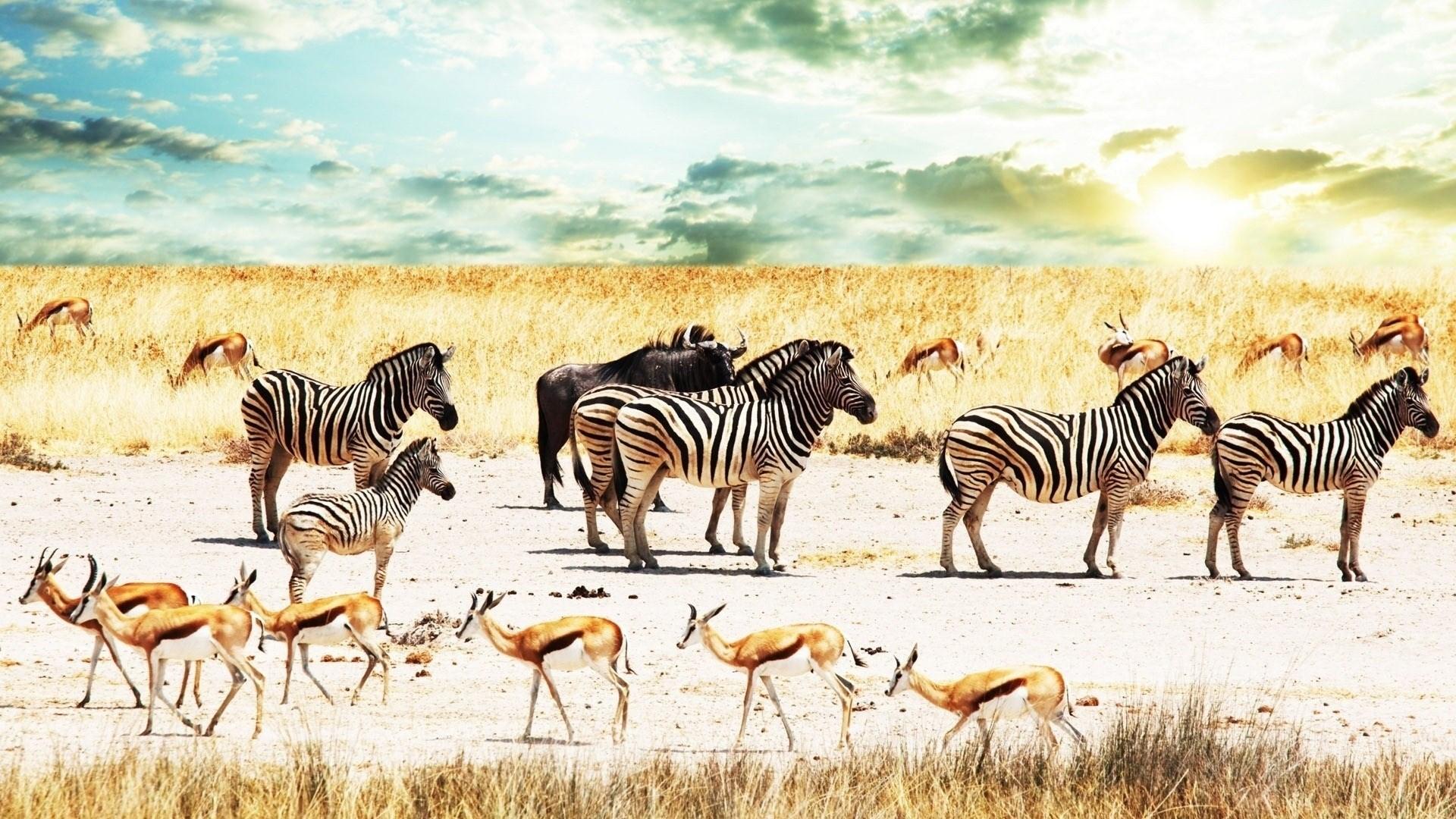 buffalo-zebra-africa-sky-savannah-antelope-backgrounds-1920x1080-wallpaper-wp3403549