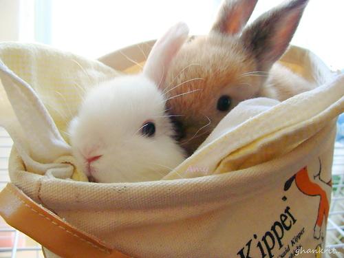 bunnies-in-the-bag-wallpaper-wp4804936