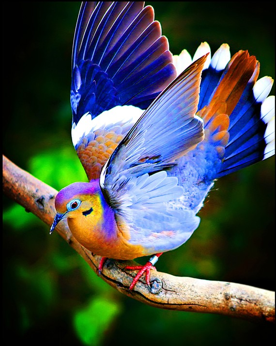 cabefbcfde-colorful-birds-exotic-birds-wallpaper-wp5801