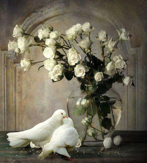 caefbacdca-peace-dove-white-doves-wallpaper-wp5801067