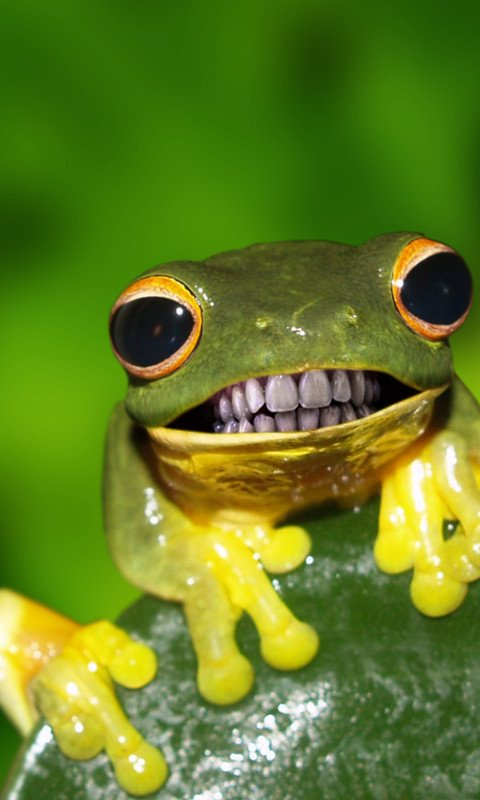 cbdcafa-funny-frogs-funny-animals-wallpaper-wp4405479