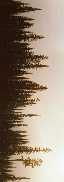 ccbcdfdf-pine-tree-tattoo-tree-tattoos-wallpaper-wp4403105